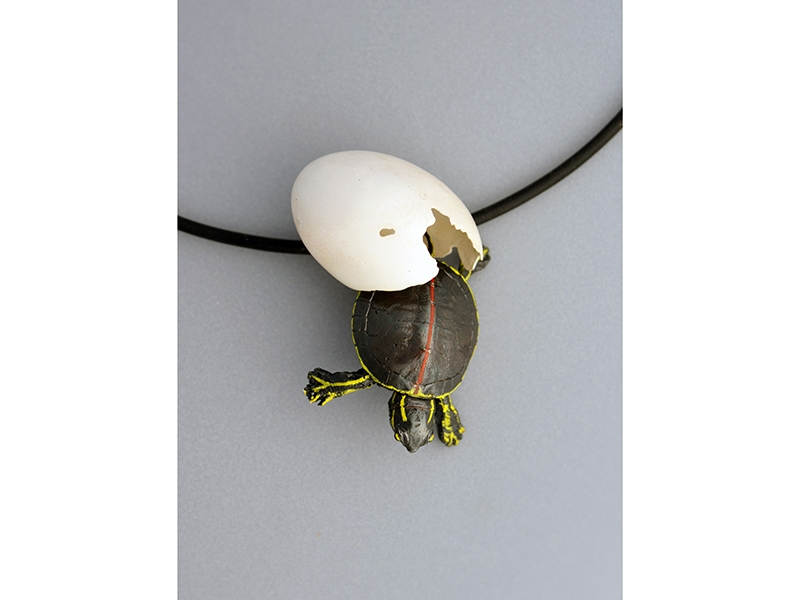 David C. Freda, Study of a Young Southern Painted Turtle